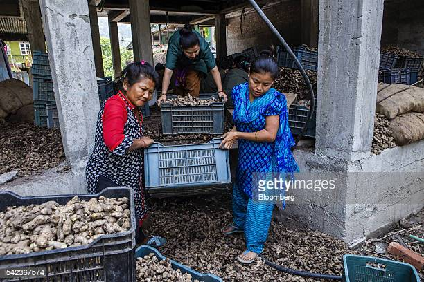 Workers carry crates of organic ginger at the Nature's Gift processing plant in Rangpo Sikkim India on Thursday May 5 2106 For more than a decade in...