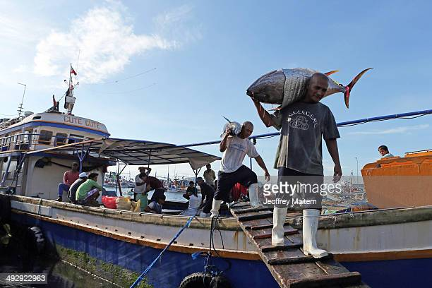 Workers carry fresh tuna at the fish port on May 21, 2014 in General Santos, Philippines. Fishing experts warn against depleting tuna stocks, saying...