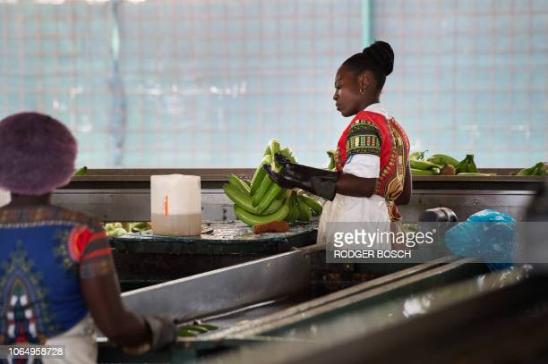 Workers clean sort and pack bananas in the packing store on a banana farm close to the town of Caxito set up by Angolan agrolivestock group...