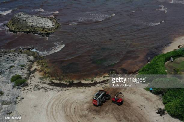 Workers clean up sargassum, a seaweed-like algae, from a beach on June 15, 2019 in Tulum, Mexico. Mexico's Riviera Maya Caribbean tourist towns of...