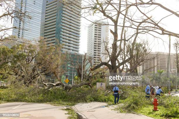 workers cleaning up after hurricane irma - miami dade county stock photos and pictures