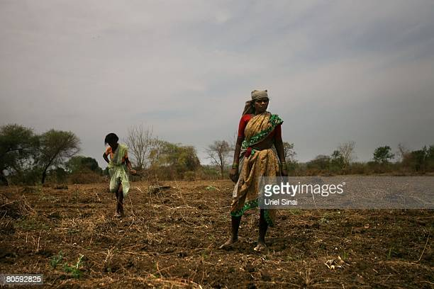 Workers clear a cotton field on April 2008 in the village of Sunna in the Vidarbha region of Maharashtra state India A wave of farmers' suicides has...