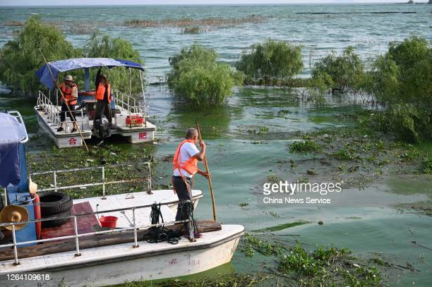 Workers collect bluegreen algae which usually blooms in summer amid warm temperature on the Chaohu Lake on August 5 2020 in Hefei Anhui Province of...