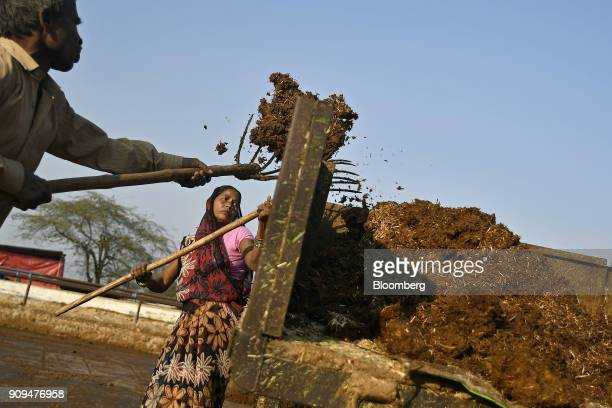 Workers collect cow dung at the Sri Krishna Gaushala on the outskirts of New Delhi India on Sunday Jan 21 2018 The nursing home offers free food and...