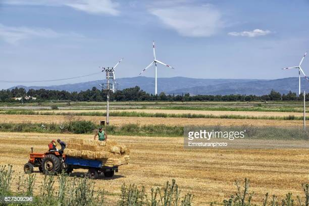 workers collecting straw bales with a tractor at harvest time near soke,aydin. - emreturanphoto stock pictures, royalty-free photos & images