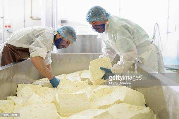 Workers cutting mozzarella cheese in cheese factory