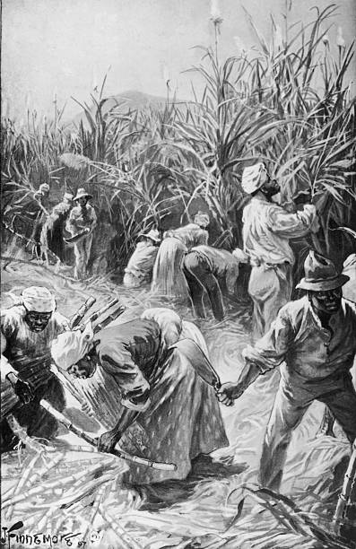 Workers cutting sugar cane on a plantation in Jamaica,...