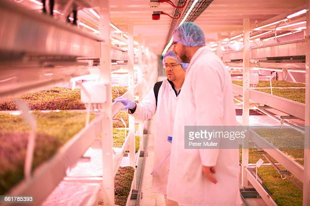 Workers discussing micro greens in underground tunnel nursery, London, UK
