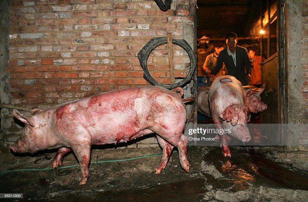 Law Enforcement Officers Shut Down An Illegal Pig Slaughterhouse In Beijing : Foto jornalística