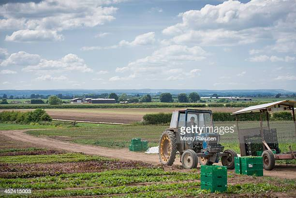 Workers driving tractor
