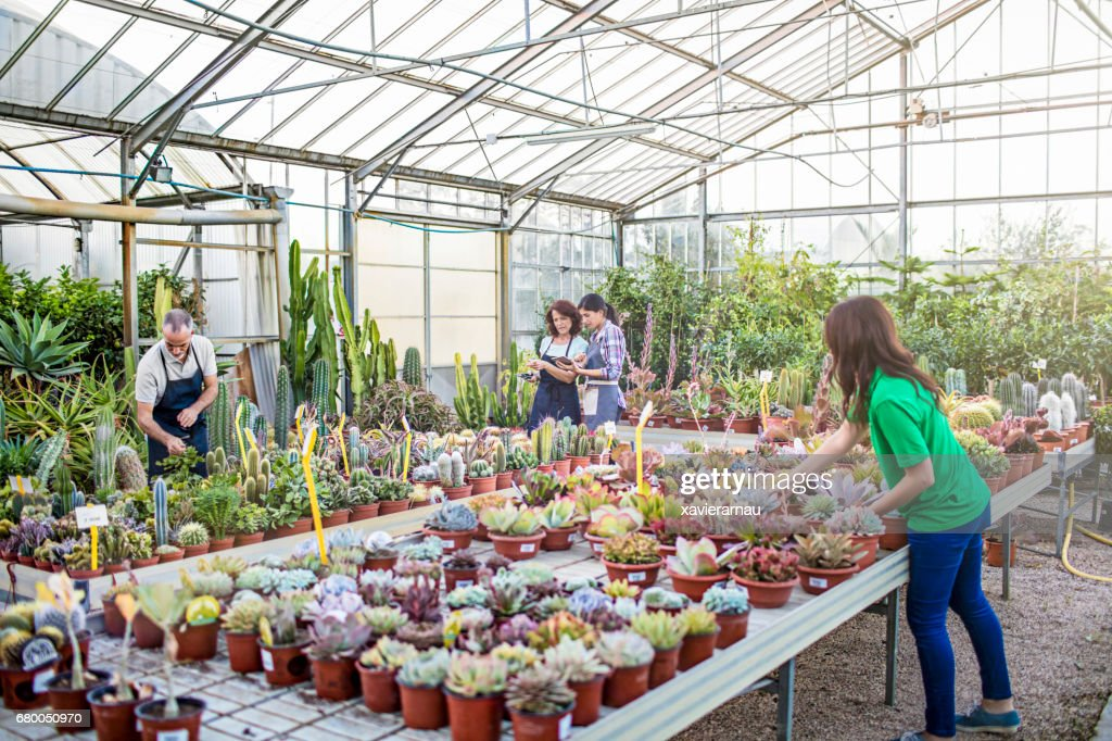 Workers Examining Plants At Plant Nursery Stock Photo