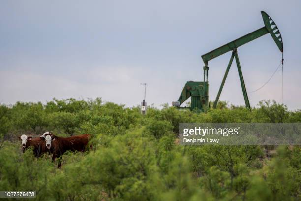 Workers extracting oil from oil wells in the Permian Basin in Midland Texas on May 2 2018 Oil production has been causing a sudden influx of money...