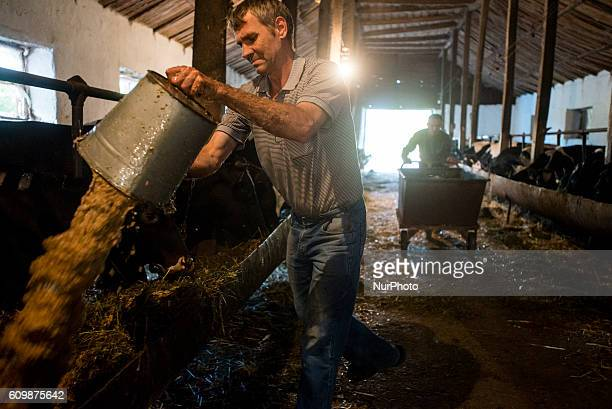 Workers feed cows at cowshed of the Nikitin Kolkhoz Ivanovka village Azerbaijan Ivanovka is a village with mainly Russian population which maintained...
