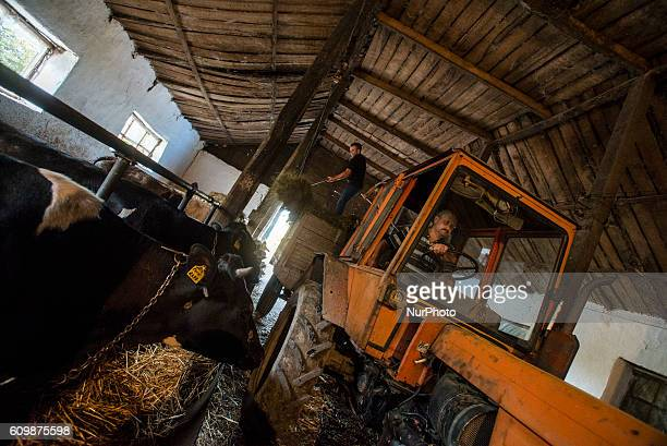 Workers feed cows hay at cowsheds of the Nikitin Kolkhoz Ivanovka village Azerbaijan Ivanovka is a village with mainly Russian population which...