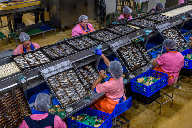 Workers fill up tins of canned sardines at the production line of Conservas Ramirez, the oldest and largest Portuguese cannery, on July 18, 2019 in...
