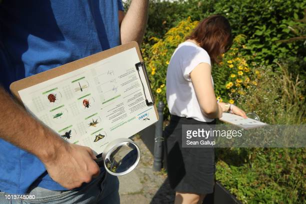 Workers from NABU Germany's biggest NGO for conservation and the study of nature inspect an urban garden for insects while participating in NABU's...