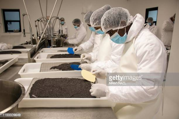 TOPSHOT Workers from the company Rova Caviar Madagascar grade and analyse the caviar extracted from a sturgeon at the Acipenser factory on June 4...