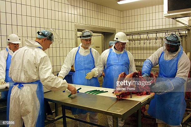 Workers from the Dutch National Agency for Cattle and Meat Control take a brain tissue sample from a freshlyslaughtered cow January 9 2001 in...