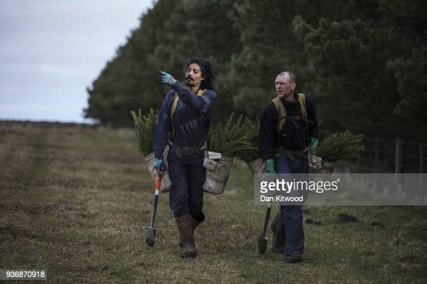 Workers from 'The Forestry Workers' CoOperative' carry Sitka Spruce to start planting on March 22 2018 in Doddington England The Doddington North...