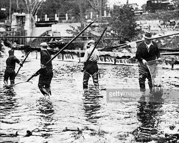 Workers from the Maine State Hatchery are sweeping Raymond Pool for salmon in this 1933 photograph The salmon which were returning up the river to...