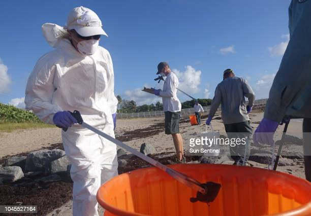 Workers from the Palm Beach County Parks and Recreation Department pick up dead fish from the Ocean Inlet Park in Ocean Ridge Fla Thursday Oct 4 2018...