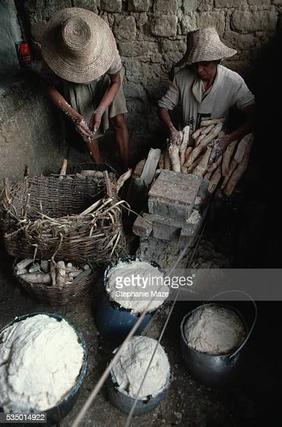 Workers Grating Sticks of Manioc