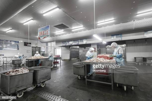 Workers handle chicken meat on a production line that manufactures Shuanghui branded sausages at a WH Group Ltd facility in Zhengzhou China on...