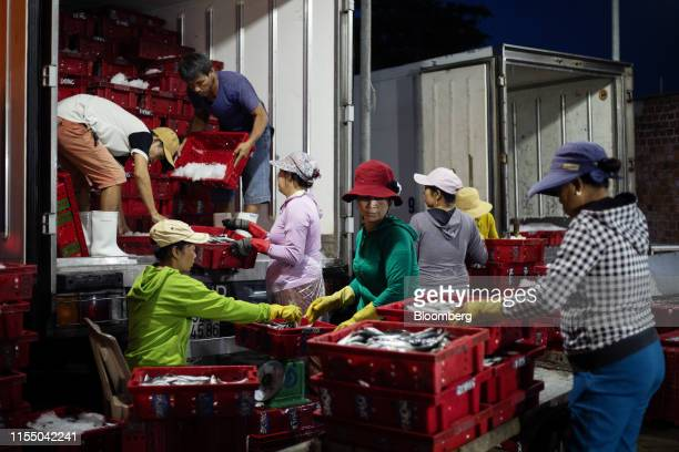 Workers handle crates of fish for transportation near Tan Quang harbor in Quang Nam province Vietnam on Monday June 27 2019 Fishermen are on the...