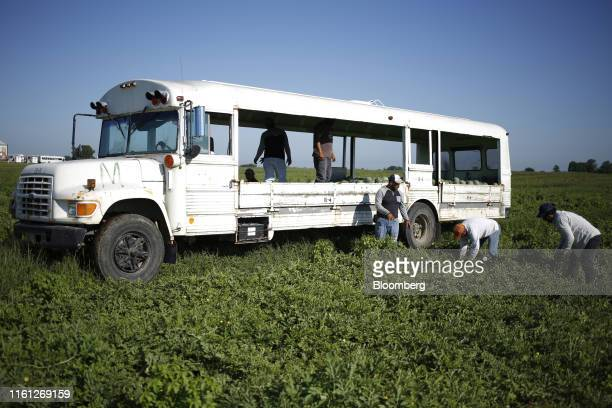 Workers harvest watermelons using a repurposed school bus at Frey Farms Inc in Poseyville Indiana US on Thursday Aug 1 2019 Overall the value of...