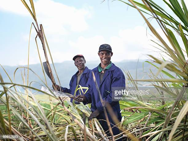 workers harvesting sugar cane - sugar cane stock pictures, royalty-free photos & images