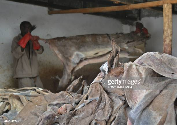 Workers hold a donkey's hide before curing at a licensed slaughterhouse specialised in donkeys in Baringo on February 28 2017 The emergence of the...