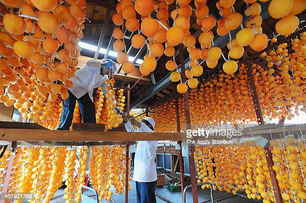 Workers hung Japanese persimmons to produce dried persimmons 'AnpoGaki' on November 22 2013 in Date Fukushima Japan The production restarted for the...
