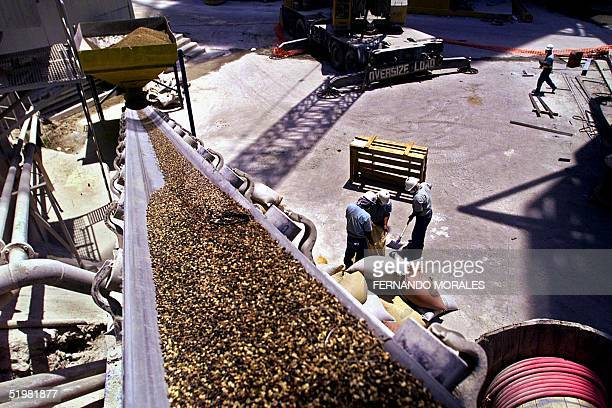 Workers in a concrete company load bags of low quality coffee to use it as fuel for the functionning of the plant in el Progreso Guatemala 30 March...