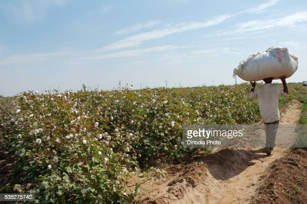 Workers in a cotton field in Gujarat, India.