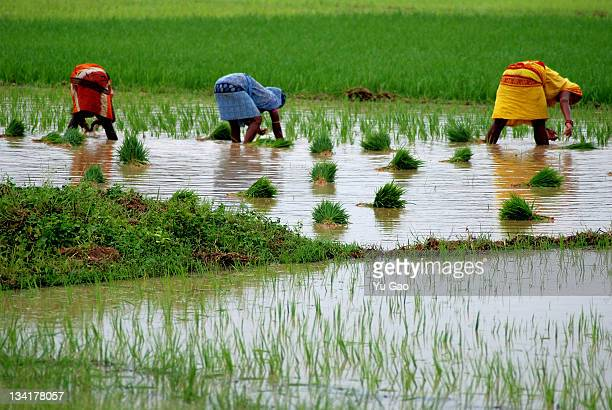 Workers in field, India