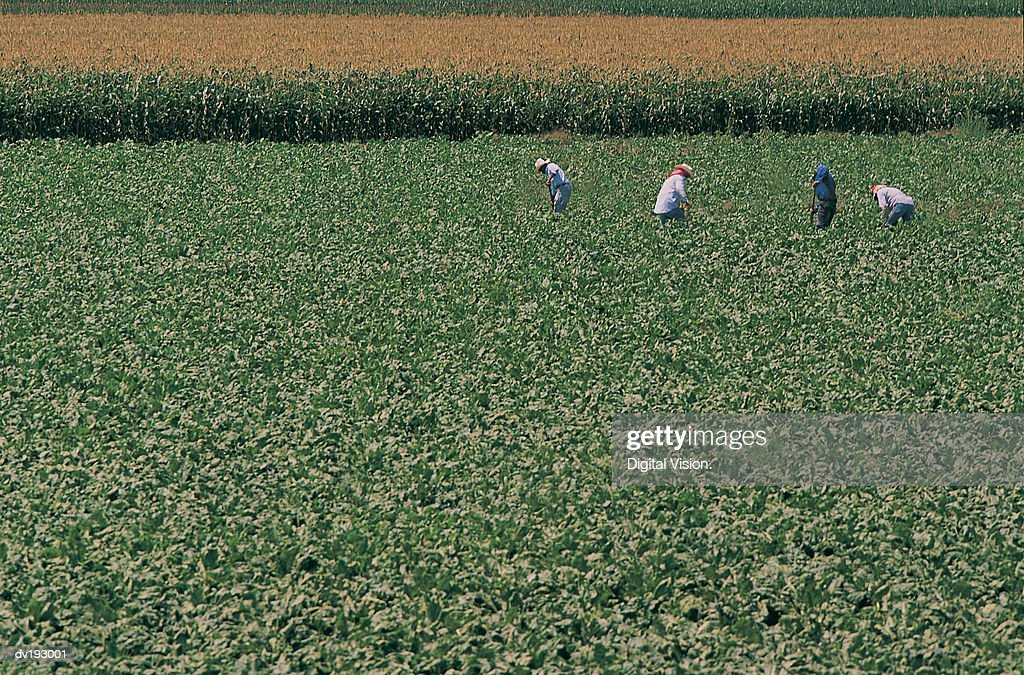 Workers in field : Stock Photo