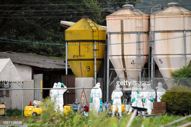 Workers in protective gear assemble at a hog farm where the first swine cholera case in the nation since 1992 was confirmed on September 9 2018 in...