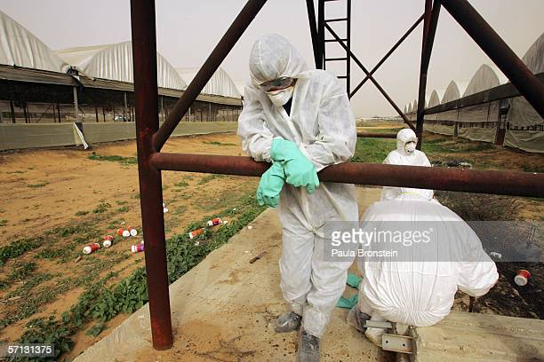 Workers in protective suits take a break from collecting dead turkeys inside a quarantined kibbutz on March 19 2006 in the southern Israeli farming...