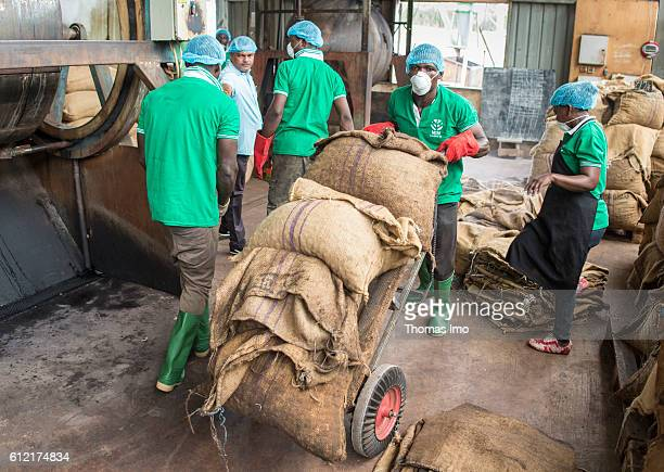 Workers in the MIM cashew processing company A man is transporting sacks with cashew nuts on a sack barrow on September 07 2016 in Mim Ghana
