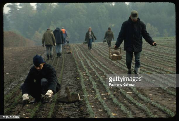 workers in tree nursery - bialowieza forest stock pictures, royalty-free photos & images