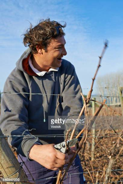 Workers in vineyards in Chile