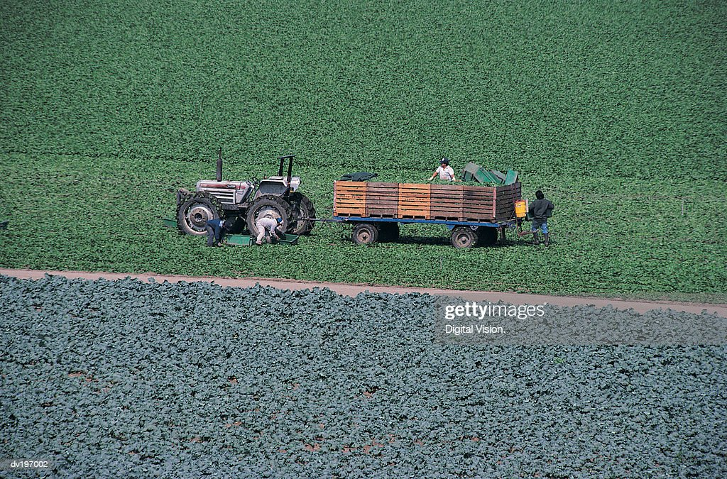 Workers in wagon pulled by tractor : Stock Photo