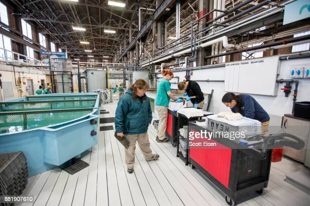Workers inside the New England Aquarium's Sea Turtle Hospital on November 29 2017 in Quincy Massachusetts The New England Aquarium has been taking in...