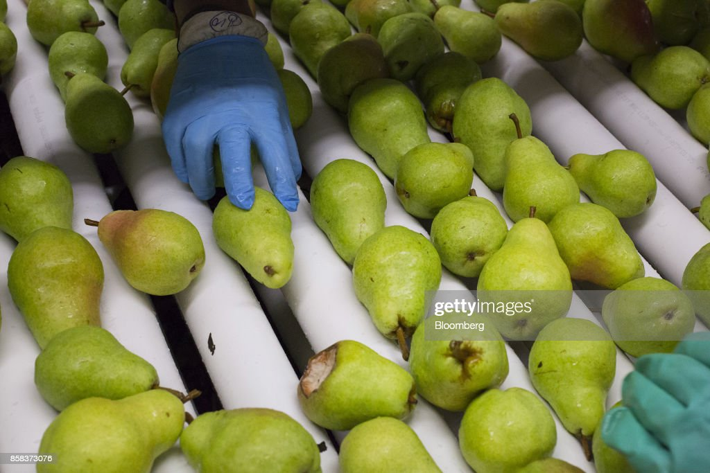 Workers inspect and sort Bartlett pears at the Stemilt Growers packing facility in Wenatchee, Washington, U.S., on Wednesday, Sept. 20, 2017. Smoke from wildfires in the Cascade Mountains troubled pear pickers in the Wenatchee Valley and Northcentral Washington in mid September. However it benefits the fruit by cooling down temperatures and tends to delay maturity. Photographer: David Ryder/Bloomberg via Getty Images