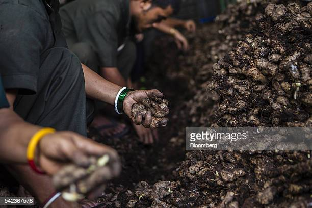 Workers inspect and sort organic ginger at the Nature's Gift processing plant in Rangpo East Sikkim India on Thursday May 5 2016 For more than a...