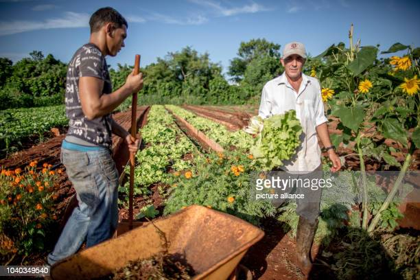 Workers involved in the Vivero Amamar urban agriculture project, which is sponsored by Deutsche Welthungerhilfe in Havana, Cuba, 17 July 2015. German...