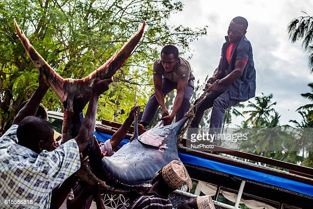 Workers load a billfish to a car at the fish market in Nungwi village Zanzibar Fishing is the main business of local people on the island They catch...