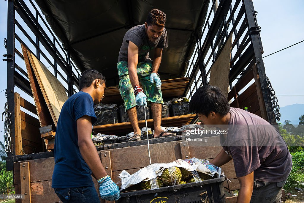 Workers load a crate of sorted and packed durians onto a truck at a trader's road side stall in Titi, Negeri Sembilan, Malaysia, on Monday, July 13, 2015. The Southeast Asian native fruit -- known for its sweet, custardy flesh and banned from Singapore's subways and hotels because of its pungent odor -- can retail for more than S$40 ($30) apiece in Singapore. Photographer: Sanjit Das/Bloomberg via Getty Images