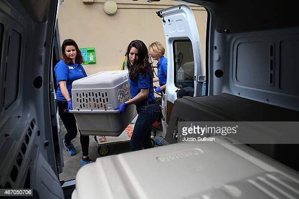 Workers load a crate with dog that was rescued from a South Korean dog meat farm into a van at the San Francisco the San Francisco Society for the...