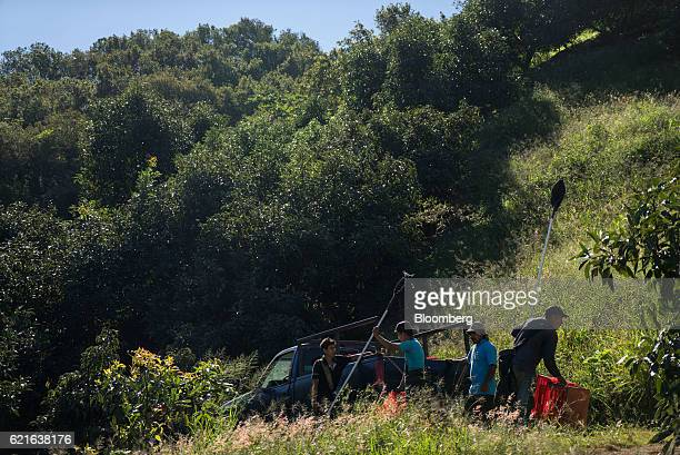 Workers load crates of avocados into a truck at the Cruz de Asta farm in Nayarit Mexico on Saturday Nov 5 2016 The demand for avocados from Mexico...